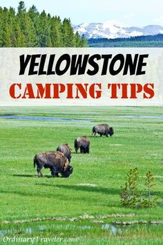 Whether you are flying or driving into Yellowstone, keep these tips in mind when planning your camping or backpacking trip to Yellowstone National Park. #yellowstonenationalpark #nationalparktips #yellowstonetips #travelguides #adventuretravel