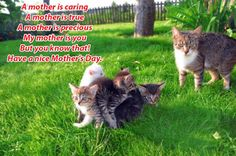 Free Image on Pixabay - Cat, Family, Pet, Love, Happy Happy Mothers Day Images, Mother Images, 2017 Pics, 2017 Images, Stray Cats, Leaf Animals, Sick Cat, What Cat, Mama Cat