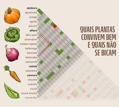 Quais Plantas Convivem Bem Numa Horta