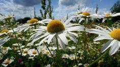 Schnu1 - Kräuterhexe: 5 Kräuter und Nahrungsergänzungsmittel gegen Stress/5 Herbs and supplements against Stress