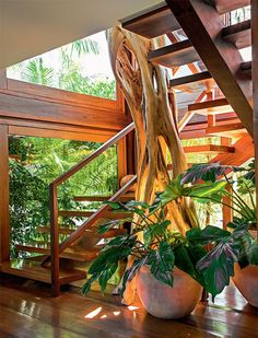15 Beautiful Indoor Plants In Under The Stairs decor 3 weeks ago Terrace and Garden 0 Views The empty house below the stairs might be another house for varied functions. If yesterday we've lined plenty of house below the steps because the kitchen,