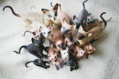 cats by *da-bu-di-bu-da on deviantART