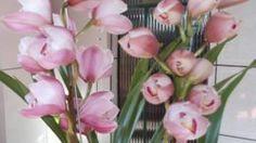 cultivar-orquídeas