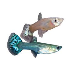 Rule of thumb live fish and always remember on pinterest for Petsmart live fish