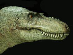 Gorgosaurus libratus profile by ~Gorgosaurus Prehistoric Wildlife, Prehistoric Dinosaurs, Dinosaur Fossils, Dinosaur Art, Prehistoric Creatures, Dinosaur Information, Pretty Drawings, Extinct Animals, Vertebrates
