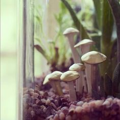 DIY: Terrarium Mushrooms. So cute like a little fairy garden!