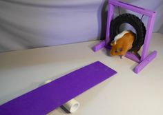 All About Guinea Pig Agility
