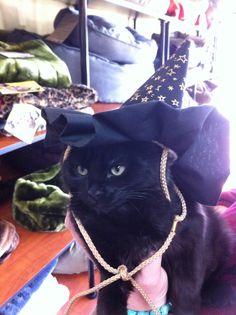 Sweet little black girl kitty!