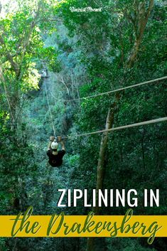 Drakensberg Canopy Tour: Exploring The Blue Grotto Forest From Above Amazing Destinations, Travel Destinations, Travel Guides, Travel Tips, Travel Goals, Travel Advice, Travel Around The World, Around The Worlds, Visit South Africa
