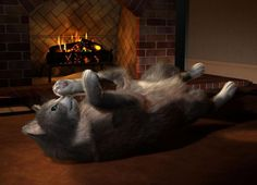 Cat furred and happy! Fur, Cats, Happy, Animals, Image, Gatos, Animales, Animaux, Furs