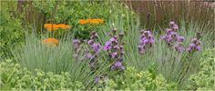 Midwest Native plants