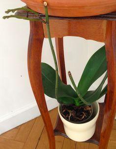 Que faire lorsque mon orchidée n'est plus en fleur?                                                                                                                                                                                 Plus