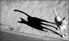 dog and scary shadow