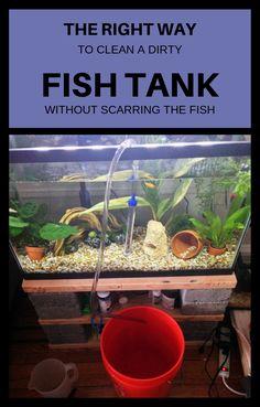 Proficient off the grid water purification you could look here Diy Aquarium, Aquarium Design, Saltwater Aquarium, Aquarium Fish Tank, Aquarium Ideas, Saltwater Tank, Fish Tank Decor, Fish Tank Themes, Fish Aquarium Decorations