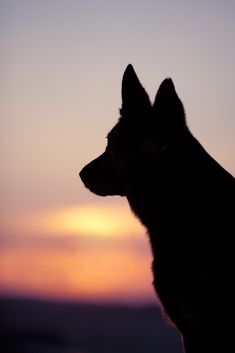 #petloss Dog Last Day, Pet Dogs, Dogs And Puppies, Chihuahua Dogs, Animals And Pets, Cute Animals, Dog Silhouette, Dog Wallpaper, Australian Cattle Dog