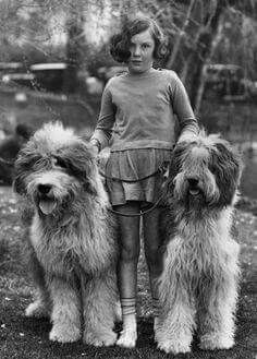 Vintage photo from 1945. Anyone know what type of dogs these are?