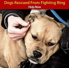 Please help rescued dogs!