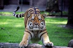 CARBON NEUTRAL ZOO: A NEW STEP TOWARDS THE EFFECTIVE CONSERVATION OF OUR ENVIRONMENT Haldwani is all set to get the country's first carbon neutral zoo. A major step towards ecological conservation, the zoo will spread over 1 400-acre complex, run using renewable resources like sun, water , and wind. Share your opinion on Posticker
