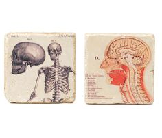 Anatomical Marble Coasters