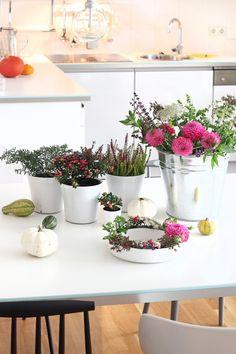 Urban Jungle Bloggers: Plants & Flowers by @sammydemmy