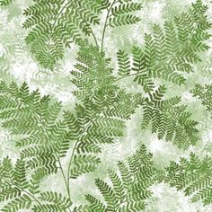 Cyathea Green Fern Wallpaper, Nature By Advantage and Brewster Wallcovering Grey Wallpaper Samples, Fern Wallpaper, Bathroom Wallpaper, Bathroom Curtains, Wallpaper Roll, Wallpaper Ideas, Wallpaper Designs, Nature Wallpaper, Stairs In Living Room