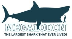 Megalodon Sightings 2009 | image naming:
