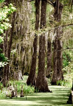 Hike through BREC's Bluebonnet Swamp Nature Center in Baton Rouge, #Louisiana. #GoBR http://redstickblog.visitbatonrouge.com/2014/07/what-to-do-in-baton-rouge-brec-parks.html