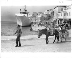 i miss the mules and donkeys. Travel Around The World, Around The Worlds, Old Photographs, Photos, Photo Search, Cruise Ships, Athens Greece, Press Photo, Donkeys