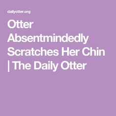Otter Absentmindedly Scratches Her Chin | The Daily Otter