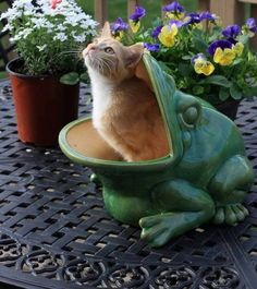 Helper Cat suggests you plant the petunias a little more to the right....