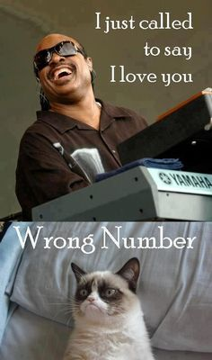 Stevie Wonder song I just called to say I love you   cat answers Wrong number,    grumpy cat meme | Tumblr