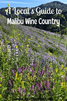 A local's guide to the best places to taste Malibu wines. Hint: it's not always at Malibu wineries! A guide to eating and drinking in Malibu wine country. The restaurants you should try in the Malibu wine region and the best Malibu restaurants. See the most beautiful Malibu vineyards while sipping Malibu wines. Visit The Old Place restaurant. Click for the local's guide to Malibu Wine Country! California Travel Guide, California Destinations, Us Travel Destinations, Usa Travel Guide, Travel Usa, Travel Tips, Maui Travel, Luxury Travel, Time Travel