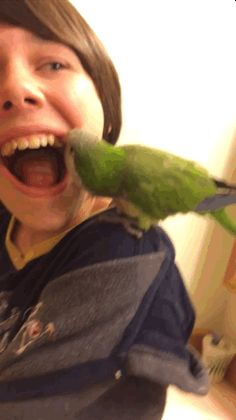 There he goes! Rocking the tooth back and forth.   This Video Of A Parrot Pulling Out A Loose Tooth Is Equal Parts Gross And Amazing