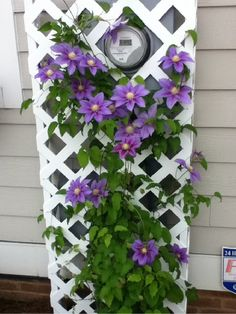 I love clematis....other than the name....sounds like a diagnosis you don't want. They should just re-name it Pretty Purple Flower.