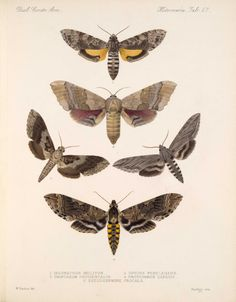 Butterflies and Moths,  Image number:bca_15_03_00_077