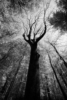 ♂ Black and white photography tree forest