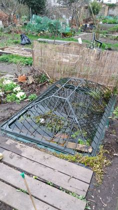 Completely safe and full of frogs. Completely safe and full of frogs Outdoor Fish Tank, Allotment Design, Turtle Traps, Koi, Outdoor Areas, Outdoor Structures, Pond Covers, Garden Pond, Frogs