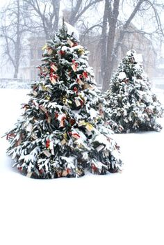 Christmas trees in snow... Reminds me of my Daughter and family, South Dakota in the Black Hills!