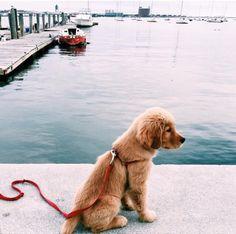 #puppy #dogtraining #doggoals  Pinterest: wendymoreno200