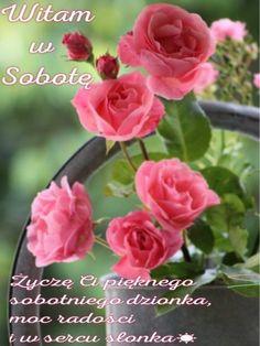 Good Morning, Rose, Flowers, Plants, Blog, Polish, Pictures, Buen Dia, Pink