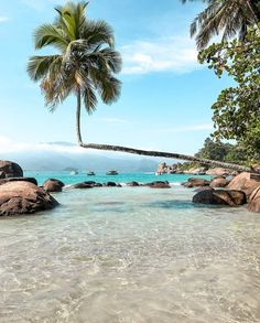 The owner of this domain has not yet uploaded their website. Brazil Beaches, Coconuts Beach, The Beach, Blue And Green, Brazil Travel, Beach Yoga, Tokyo Travel, Big Island, Beach Pictures