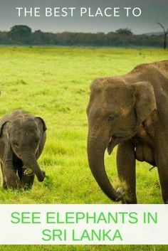 Where is the Best Place to See Elephants in Sri Lanka?