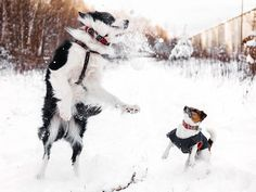 White winter with our furry friends ;)  #DogsLife #LifeWithDogs…