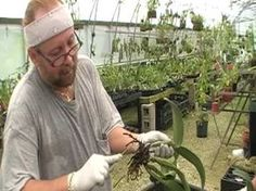 The Orchid Doctor - How to Replant an Orchid Part 1 - orchidmania south florida - YouTube