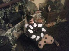 I miei cuscini  biscotti