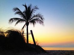 Dune palm colors