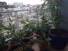 cham-soc-cay-kieng-vuon.jpg 960×720 pixel