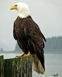 cut out eagle (don't include the stump)