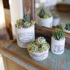 Vintage jars are perfect for planting succulents in! They make really special hostess gifts, too! Arrangements by Dalla Vita.