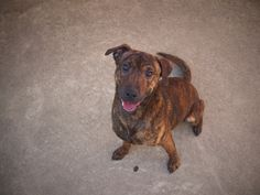 nelson D A P S Shelter Dogs, Animal Shelter, Animal Protection, Dog Pictures, Animals, Animal Shelters, Animales, Animaux, Animal